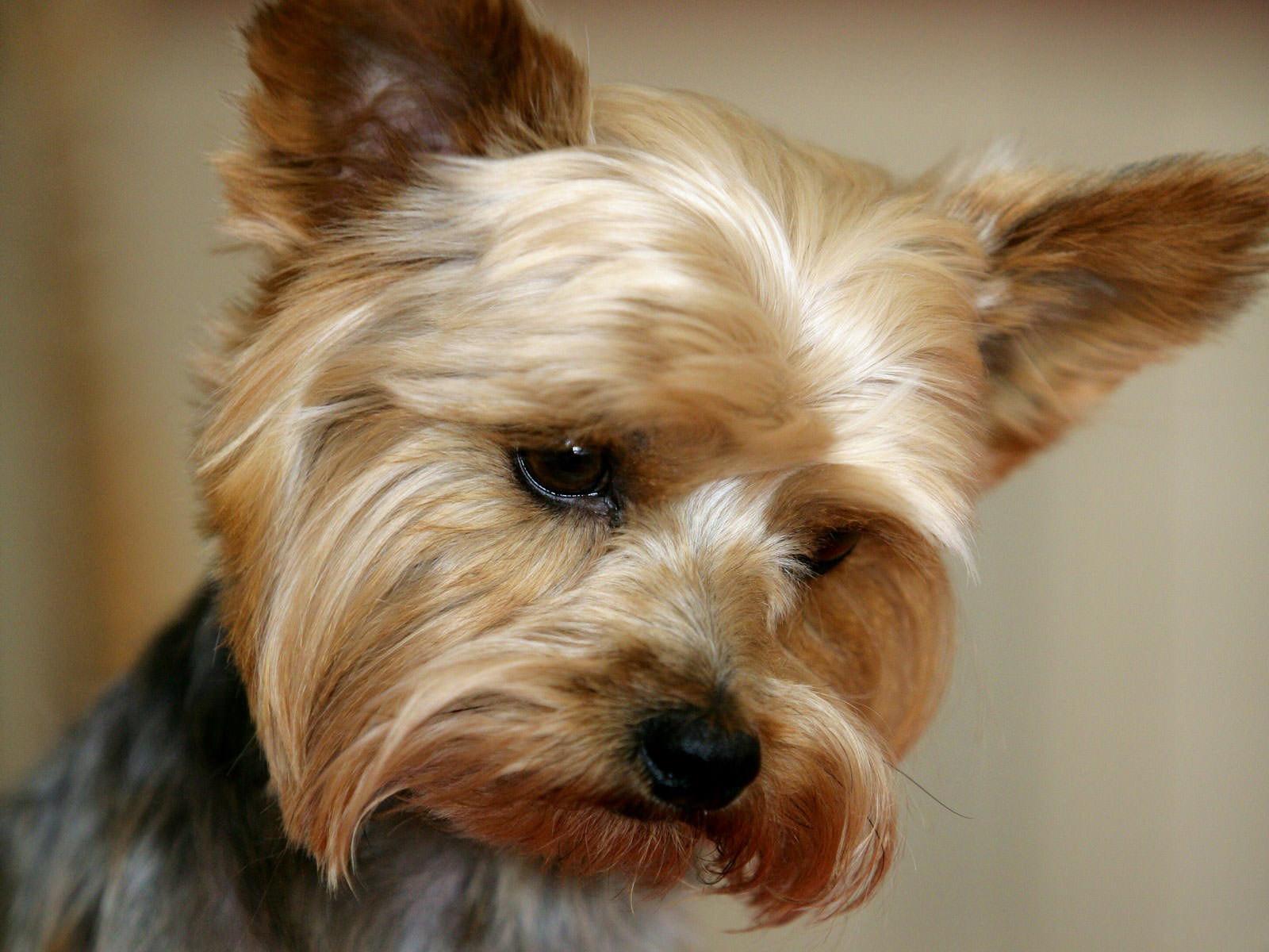 Cani di piccola taglia: conosciamo alcune razze