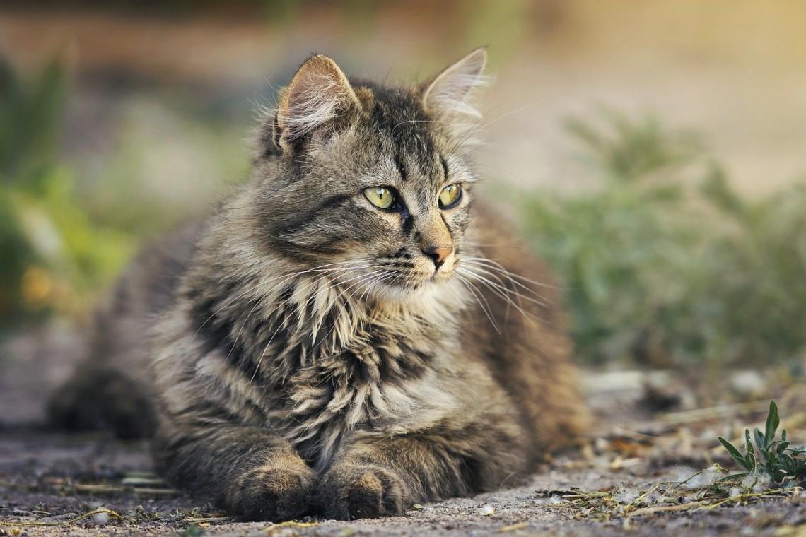 gatto_horner