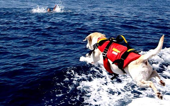 Palermo: arrivano i cani da salvataggio sulla spiaggia