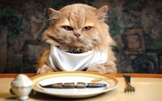 Alimentazione del gatto: ecco cosa deve mangiare