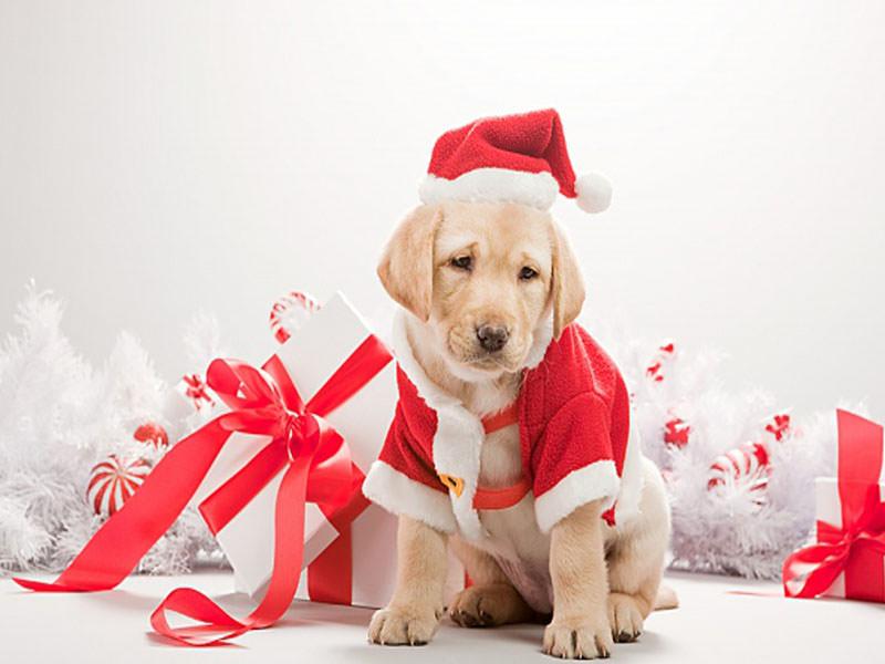 Migliori regali per il tuo cane [DICEMBRE 2017]