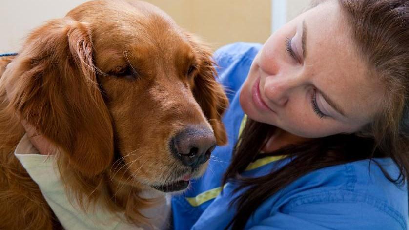 Diarrea nel cane: ecco cosa devi e non devi fare