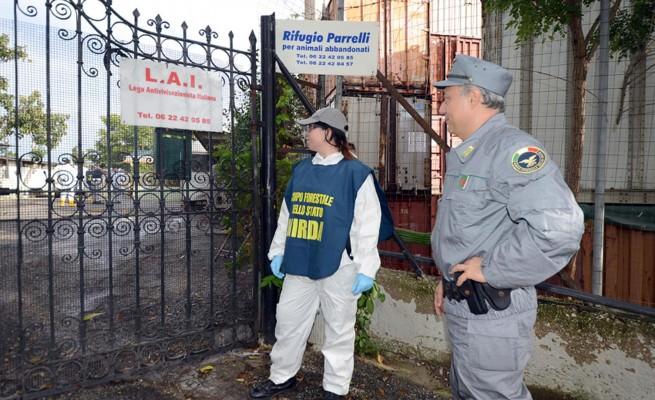 Roma: canile con 500 esemplari sequestrato dalle autorità