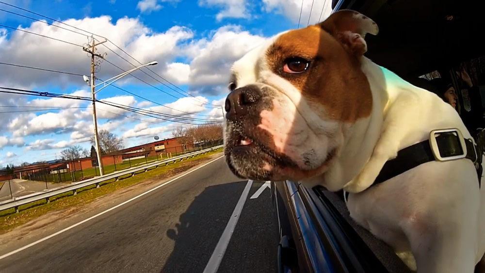 Viaggio cane: come abituare il cane alla macchina