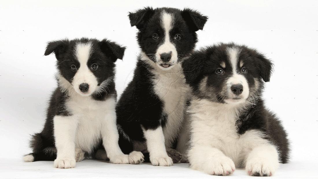 Come educare un cane : le tre fasi da conoscere