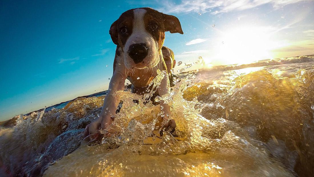 Come proteggere il cane dal caldo, i consigli del veterinario