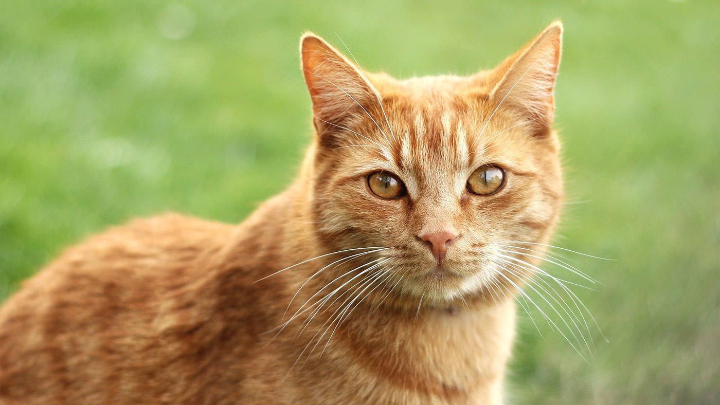 Giardia nel gatto: come riconoscerla ed eliminarla