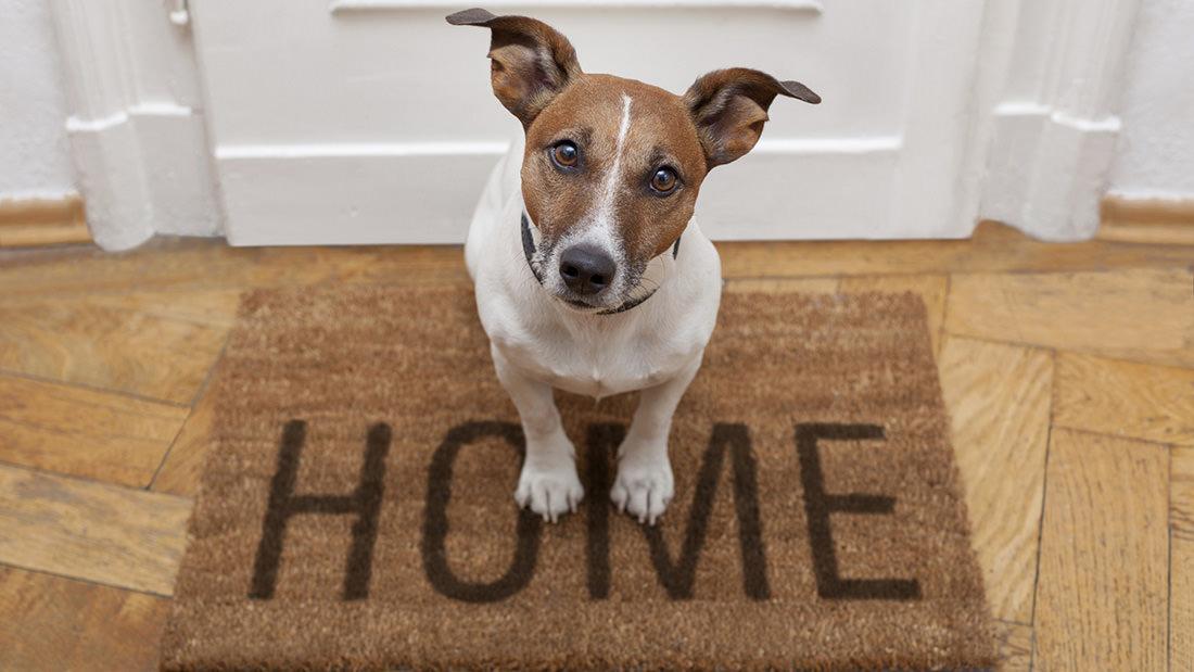 Il cane può uscire dopo il primo vaccino?