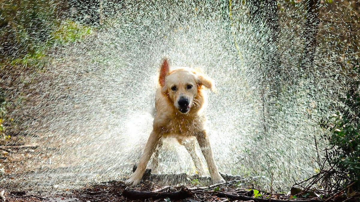 Forfora cane: ecco come risolvere definitivamente