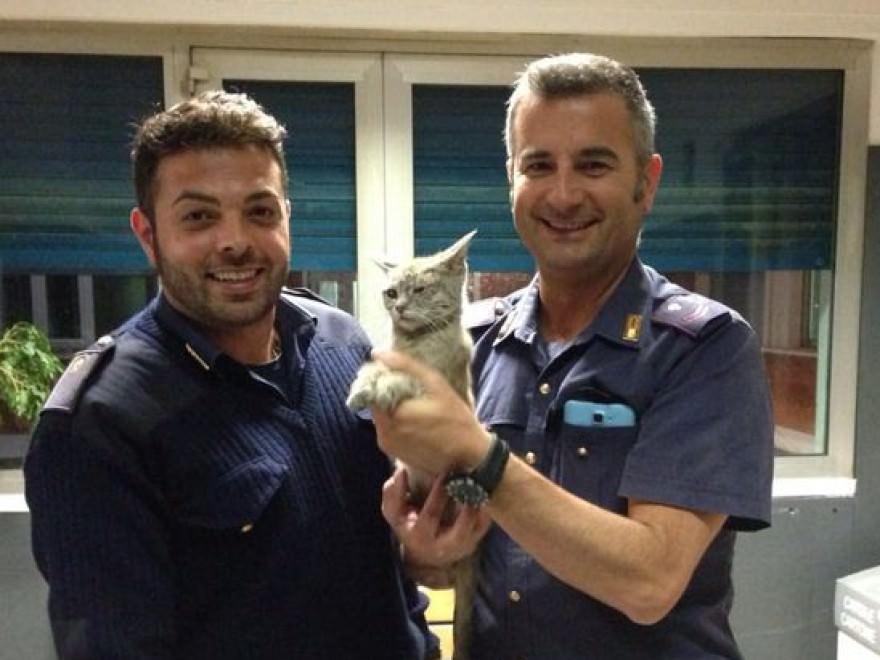 Lanciano gatto da auto in corsa: il micio sopravvive