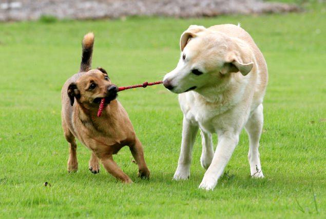 Decifrare il linguaggio dei cani, un passo in avanti