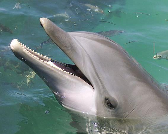 Delfino salva cane da annegamento