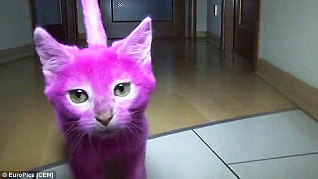 Gatto muore avvelenato: la padrona lo aveva tinto di rosa