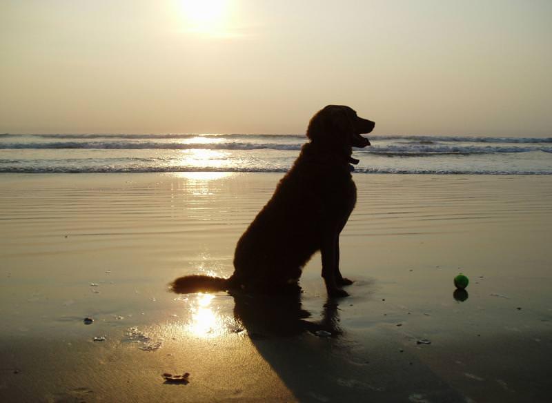 News dalla California: i primi cani sarebbero nati in Europa 18 mila anni fa