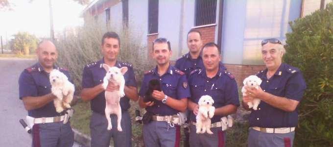 Cuccioli chiusi nel bagagliaio: arrestato trafficante di cani