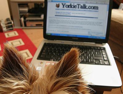 Attenzione: truffa online sui cuccioli di razza