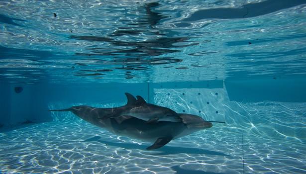 Zoomarine: nato il primo delfino chiamato Roma