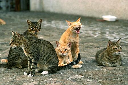 Animal hoarders: quando l'amore per gli animali diventa ossessione