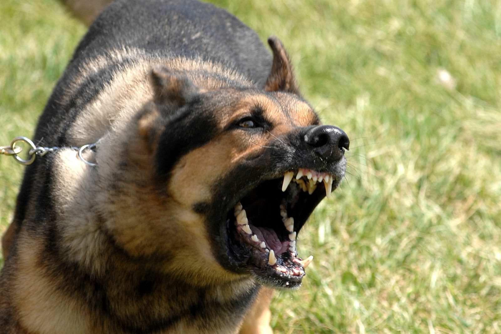 Regno Unito: pene più severe per i proprietari di cani aggressivi