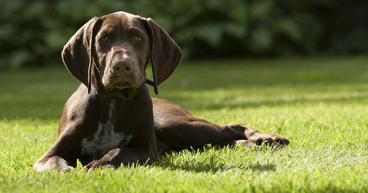 Cane mangia la cacca: cause e cosa fare