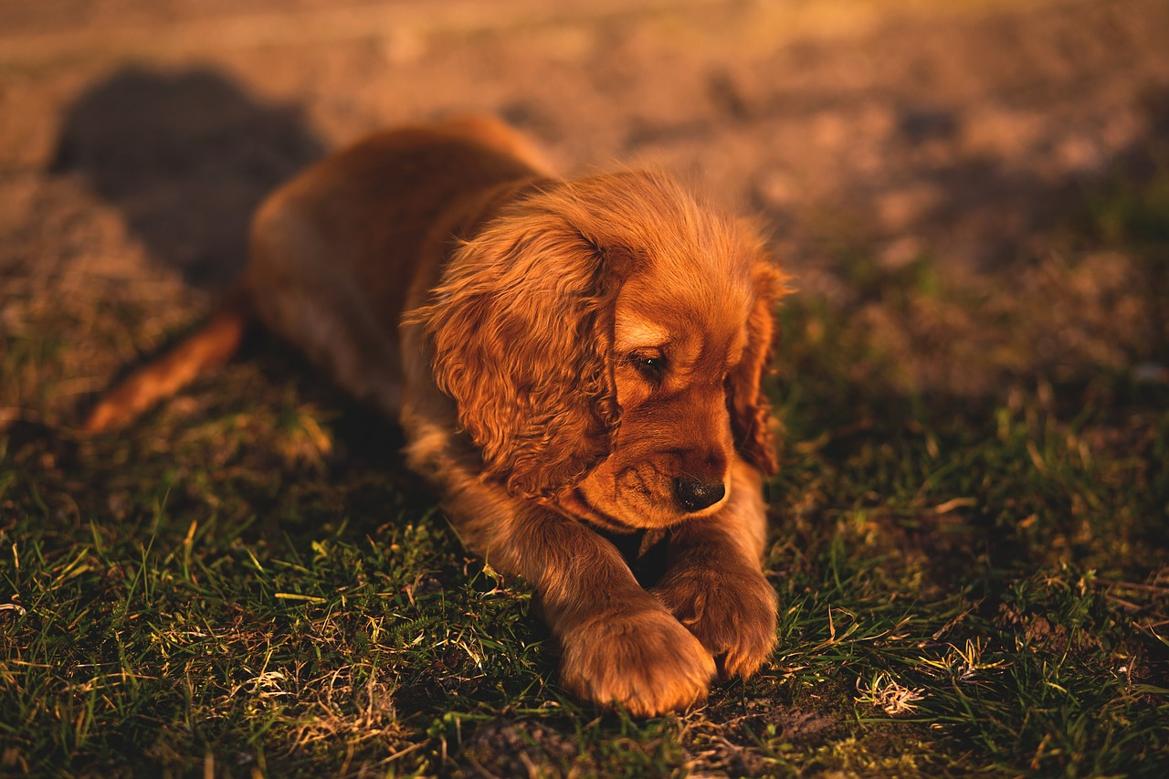 Pulci cane: 5 consigli per riconoscerle e curarle